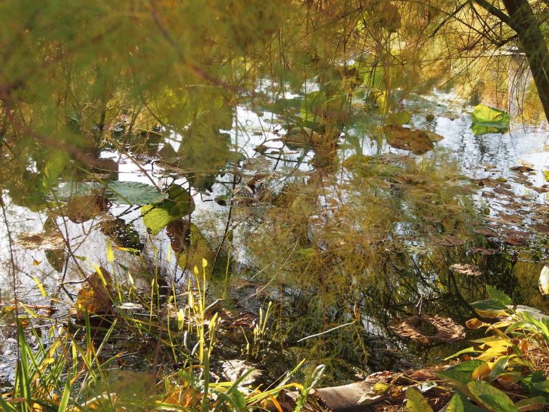 still ruht der See (oder Teich)